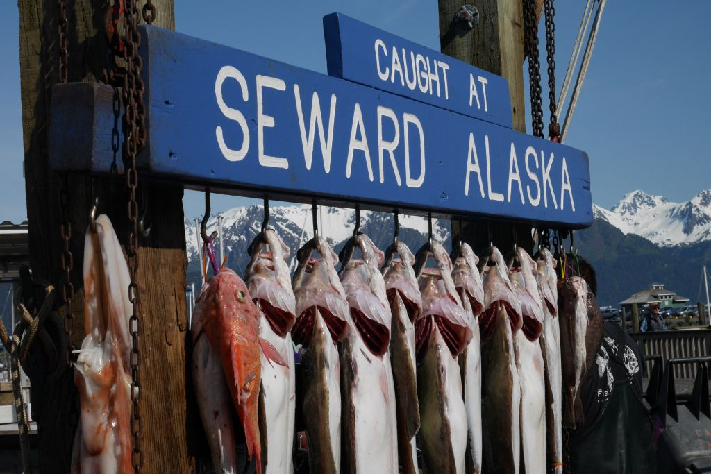 Port de Seward : une étape du roadtrip en Alaska