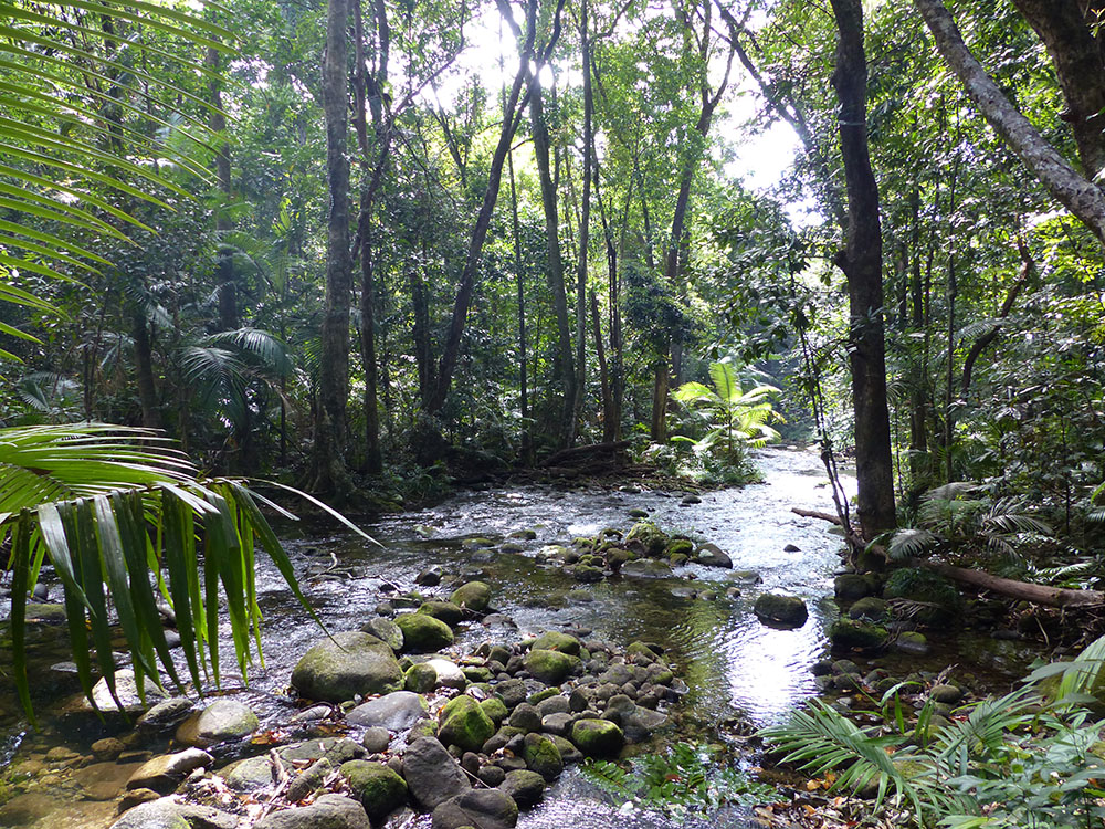 La forêt tropicale de Daintree Rainforest