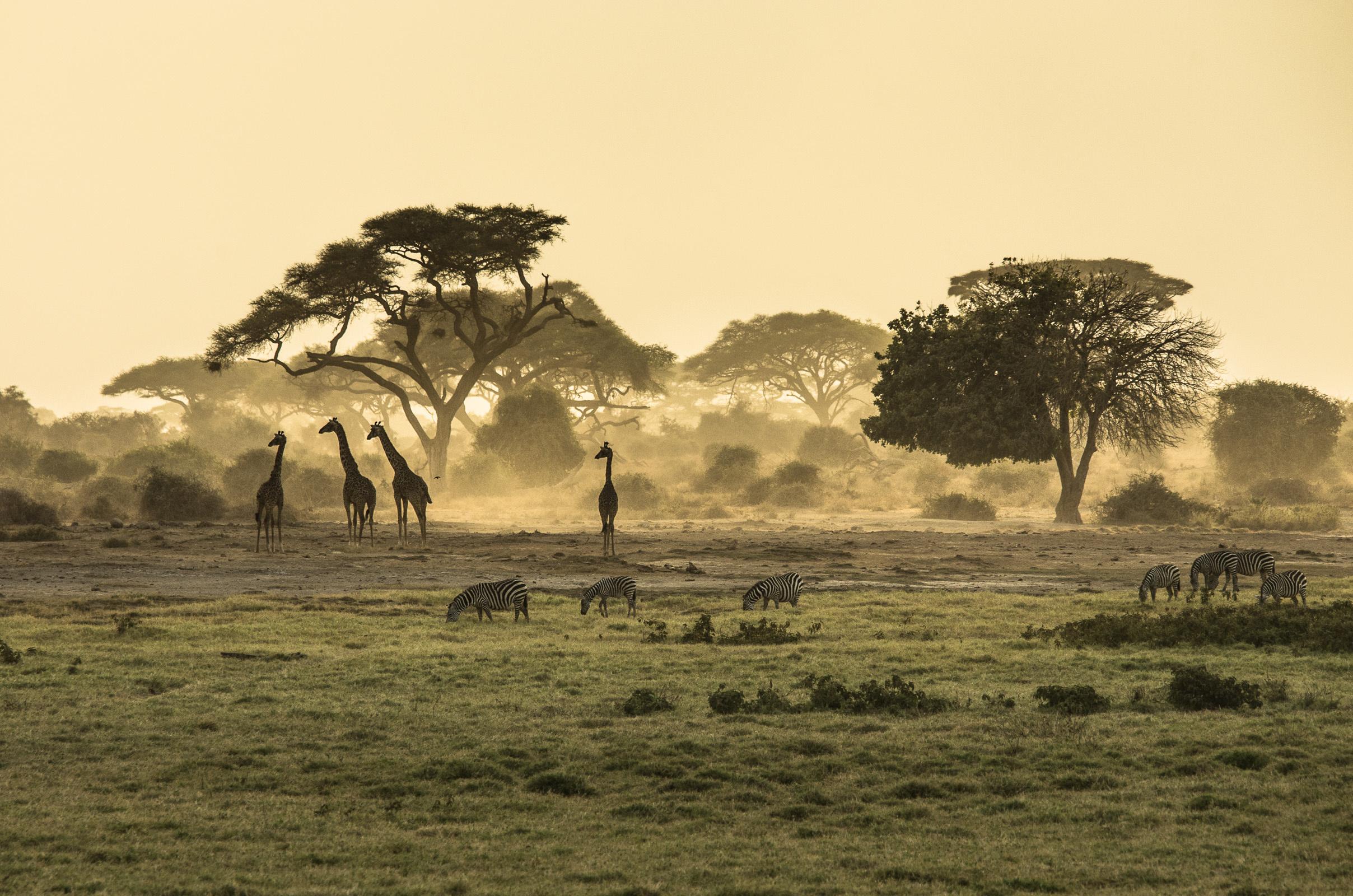 Voyager en afrique de l 39 est mode d 39 emploi chapka for Emploi paysage
