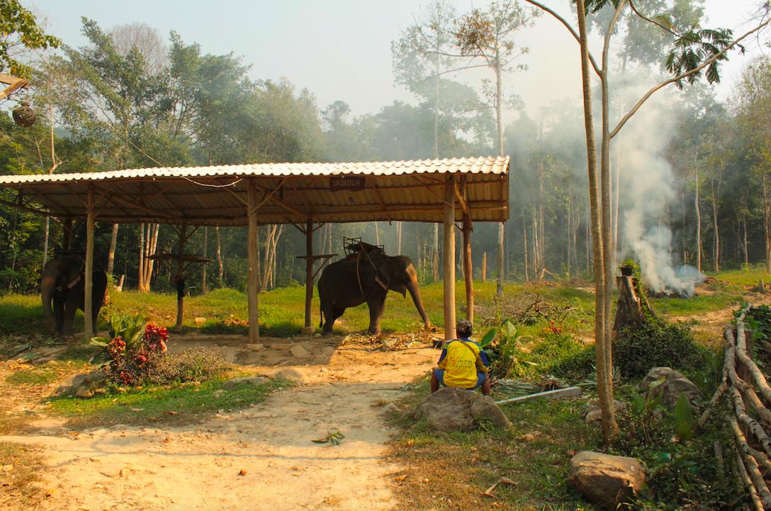 Réserve d'éléphants en Thailande