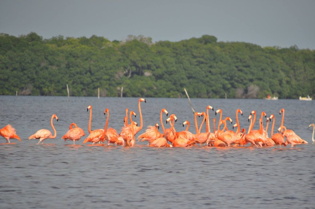 Un tour du monde en camping-car à la rencontre des flamants roses