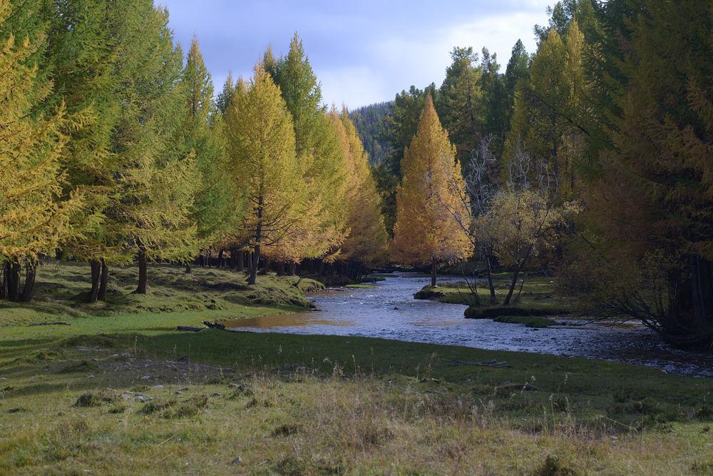 les couleurs de l'automne en mongolie