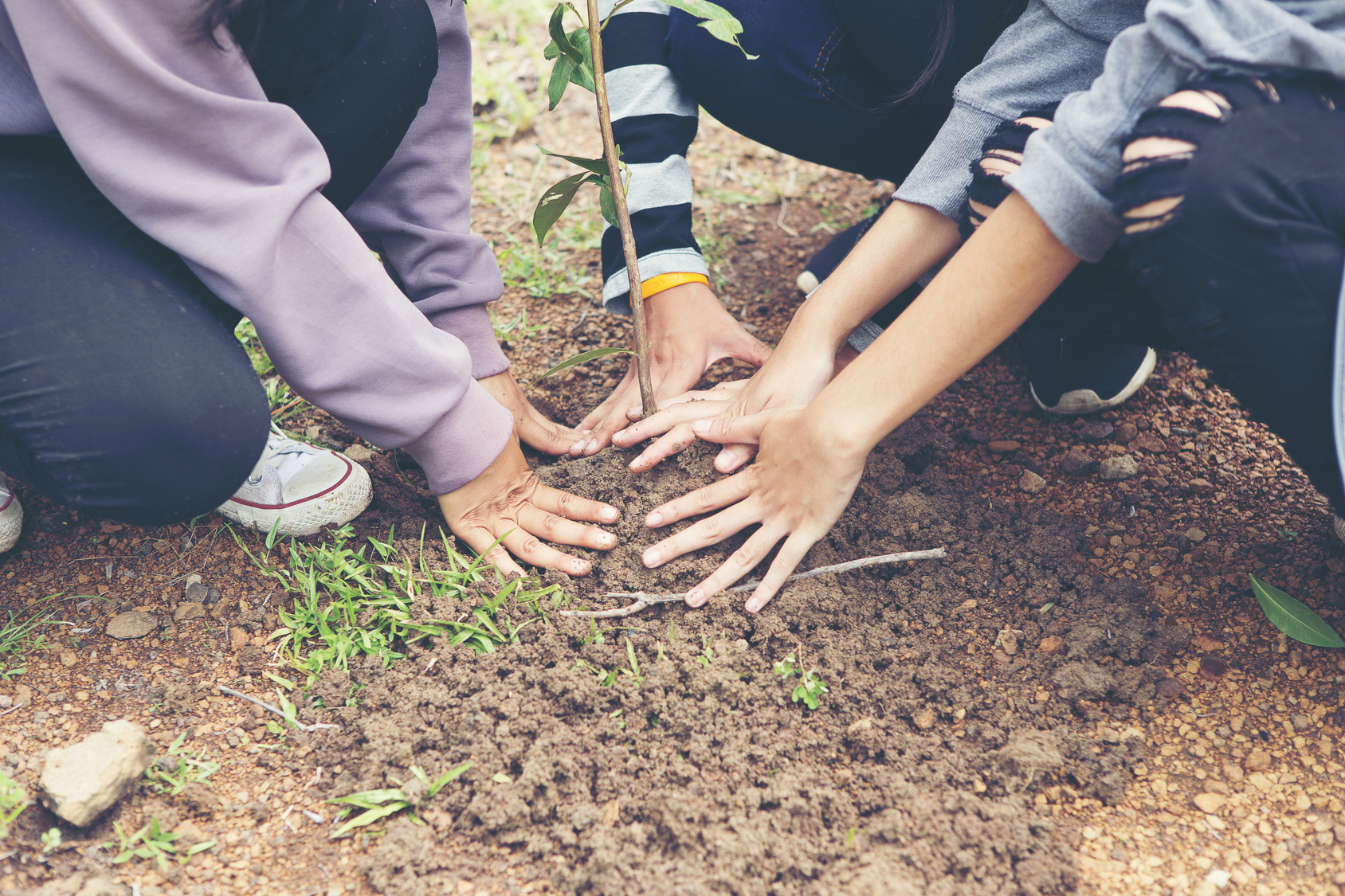 Le volontariat écologique et responsable, c'est aussi planter des arbres