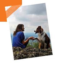 Comment voyager avec un chien ?