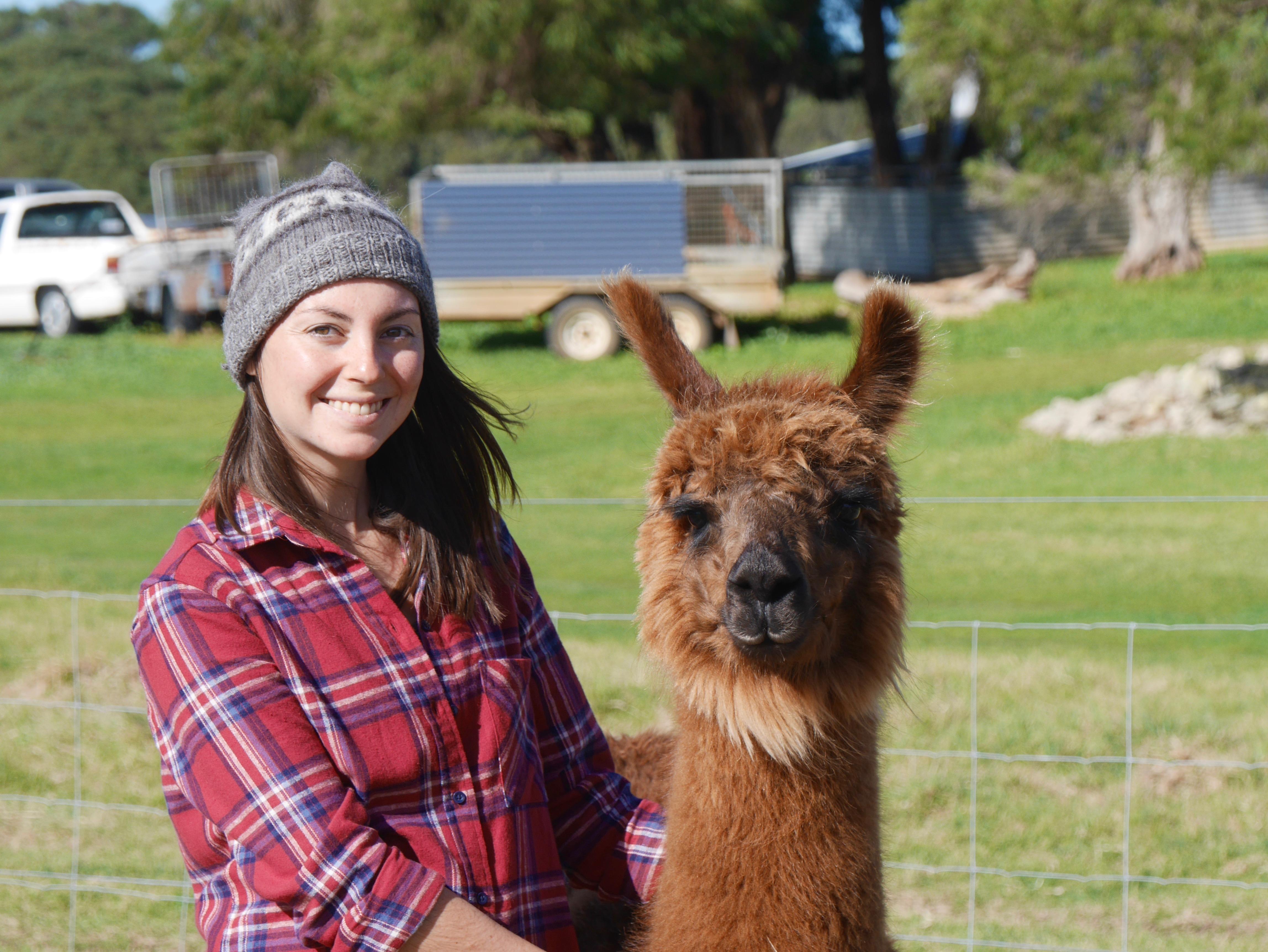 des Alpagas en Australie