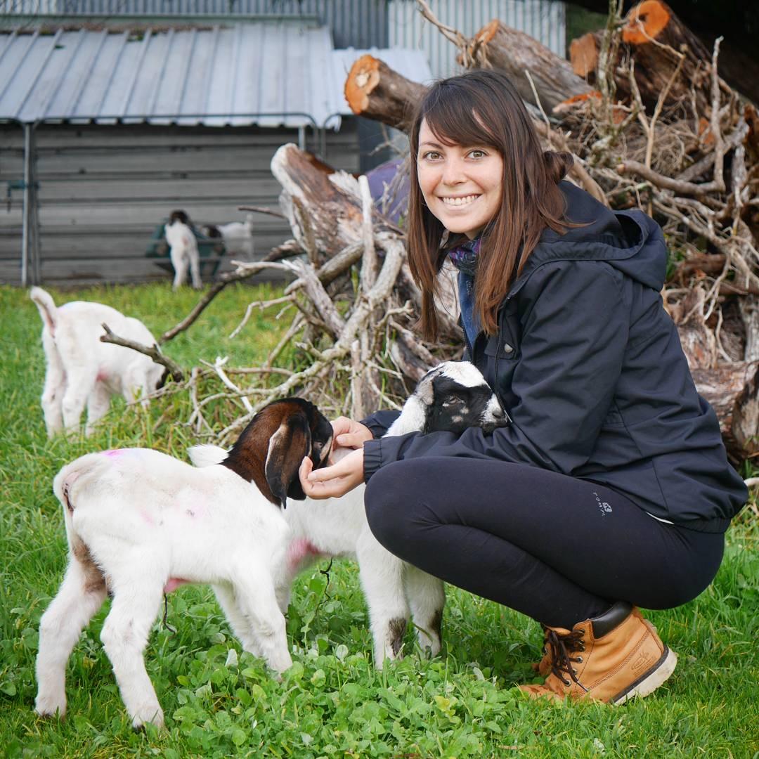 Helpx en Australie dans les fermes