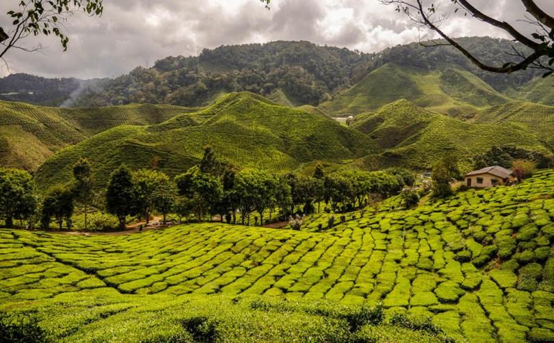explorer les stations climatiques de Cameron Highlands en Malaisie
