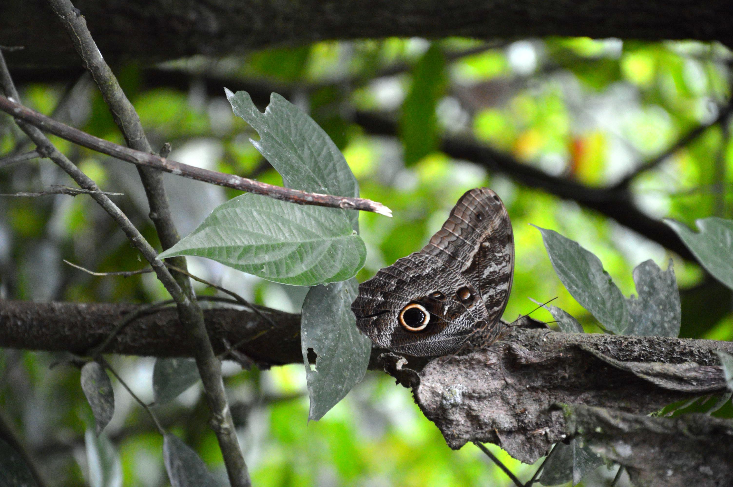 voir la faune et la flore en Amazonie