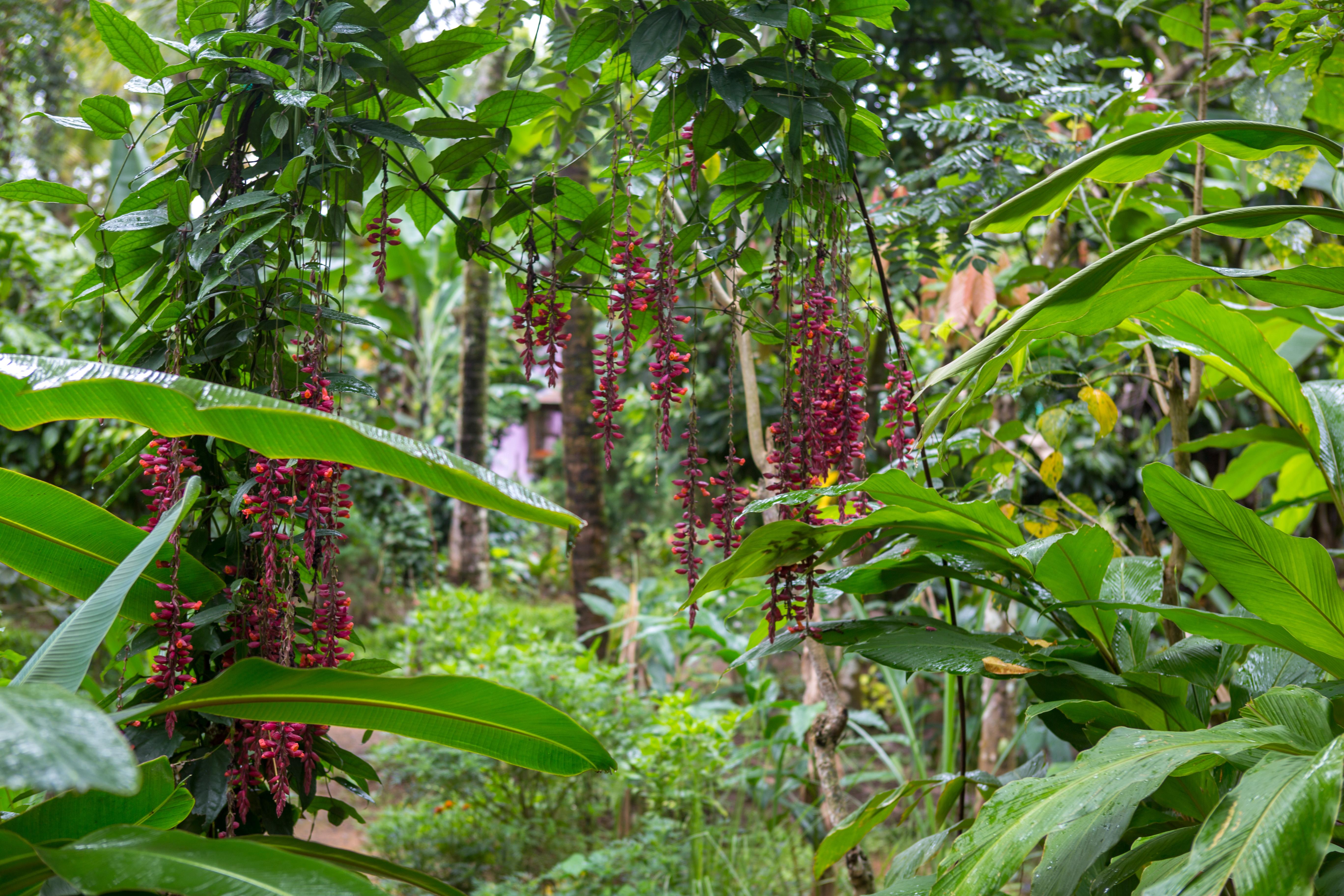 visiter les forets tropicales du Kerala en Inde