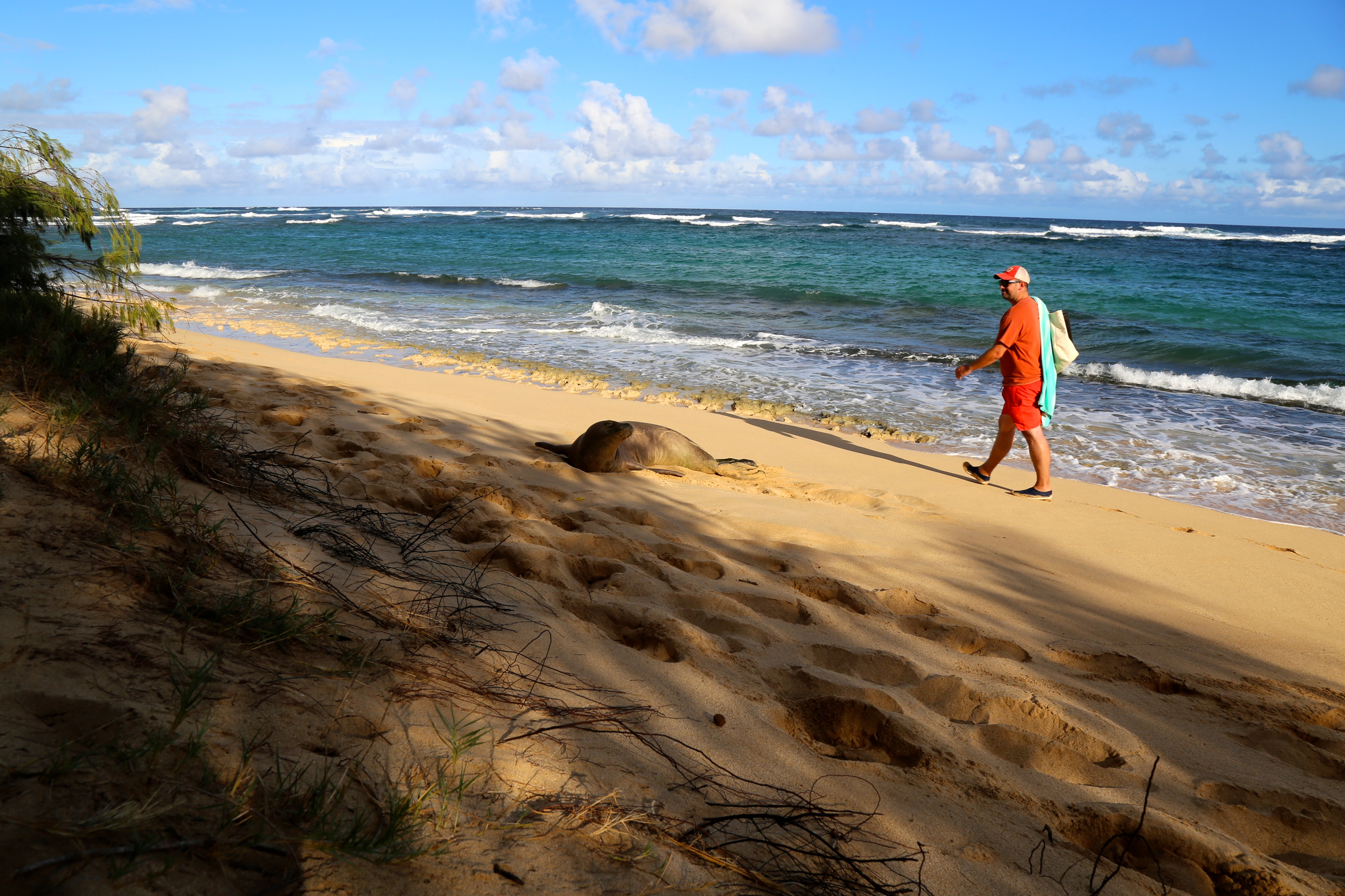 promenade sur une plade deserte lors d'un sejour a Kauai