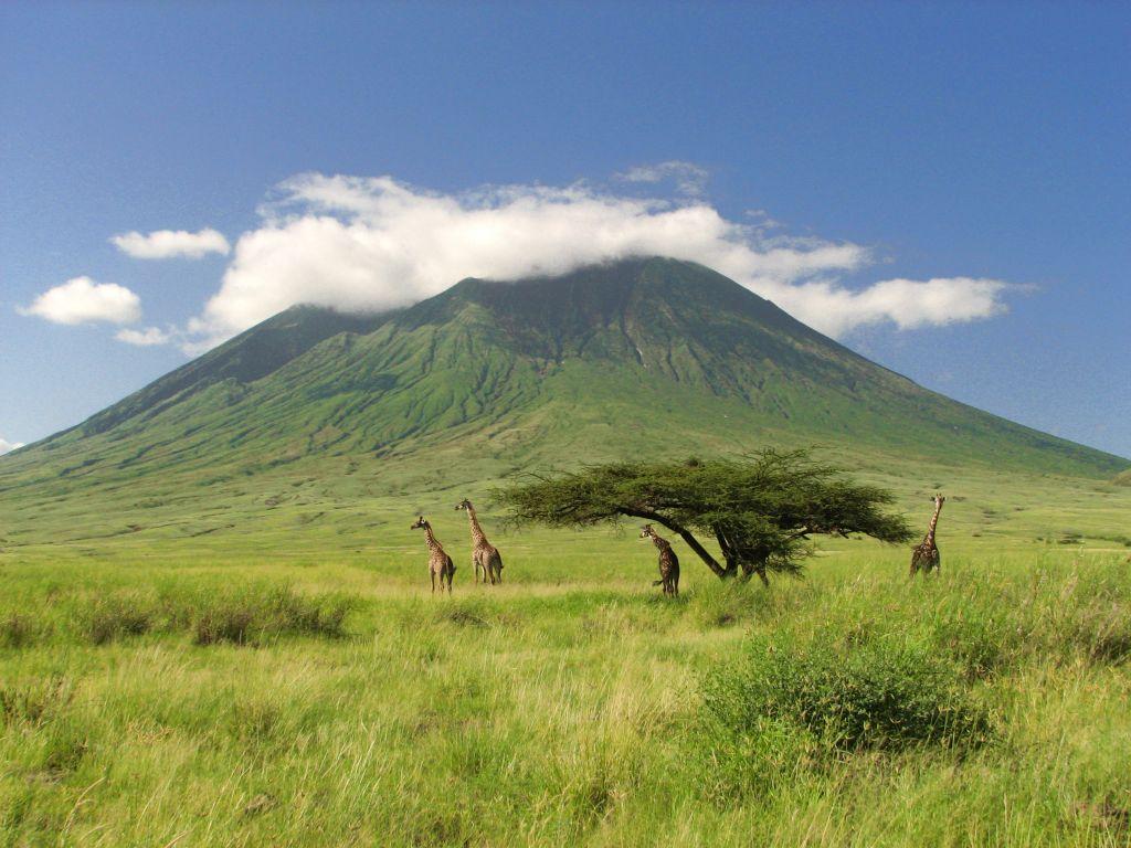 obtenir un visa pour la Tanzanie et faire un safari dans la savane