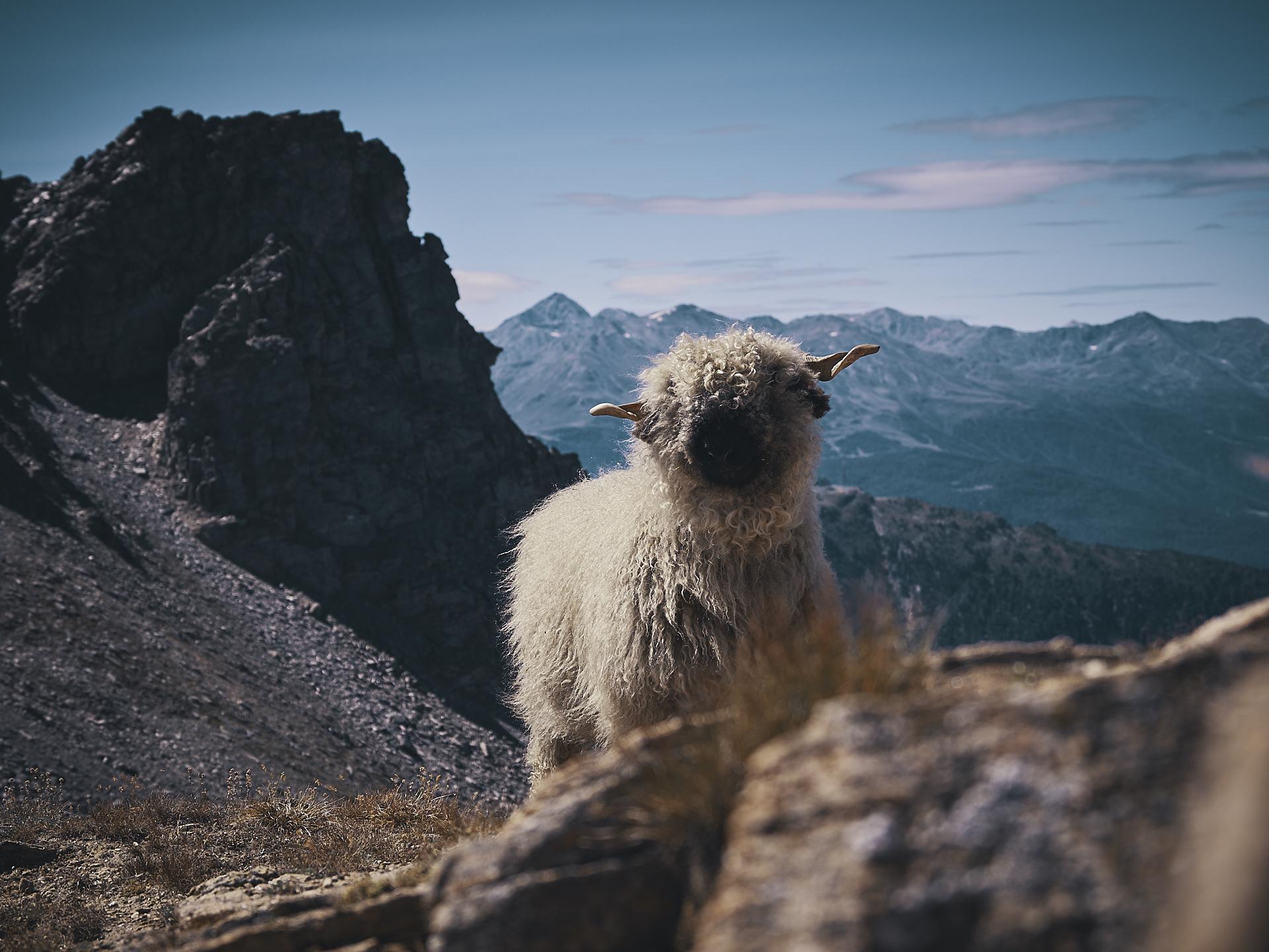 randonnée dans le Valais en Suisse