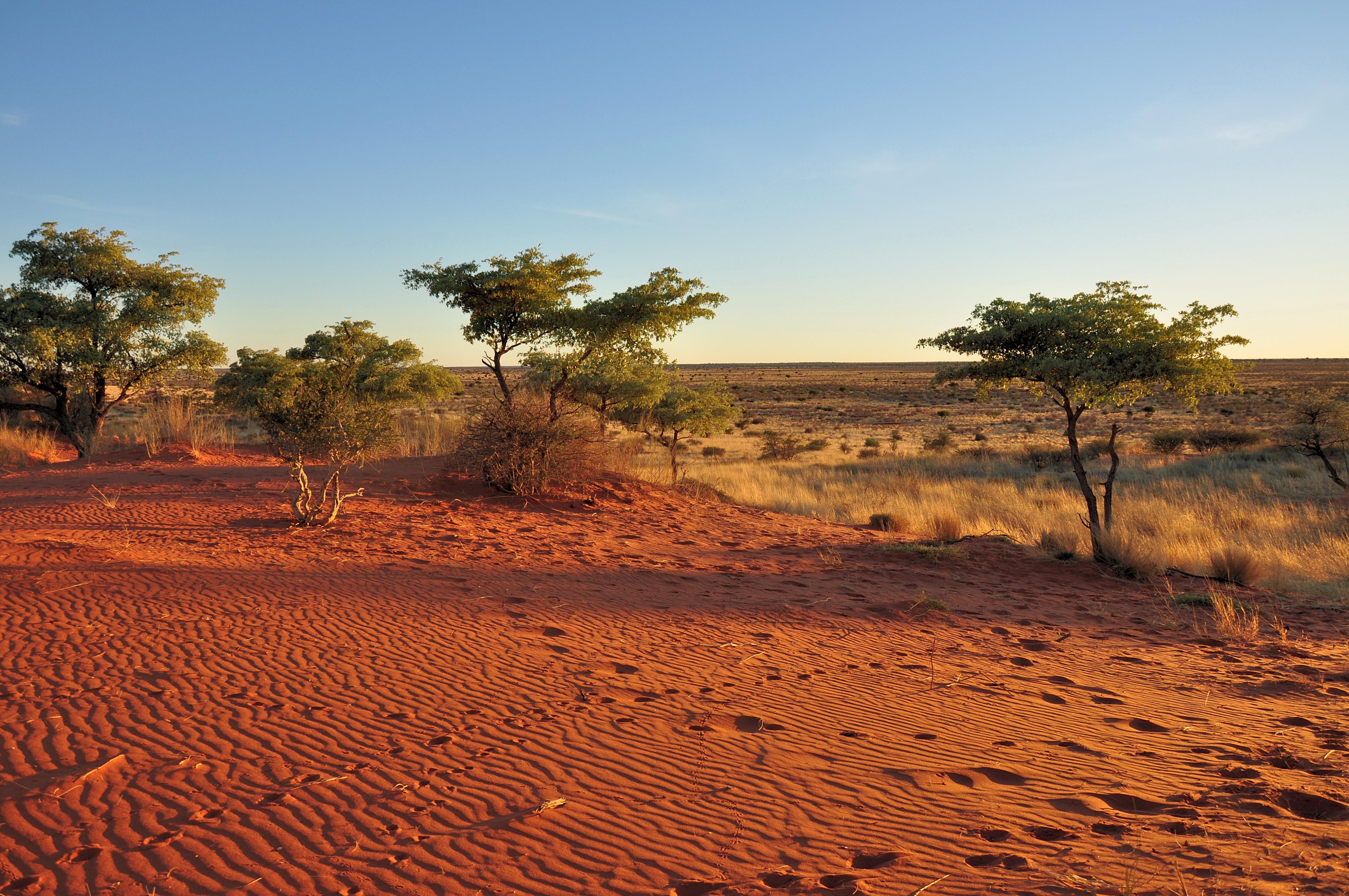que faire au Botswana ?