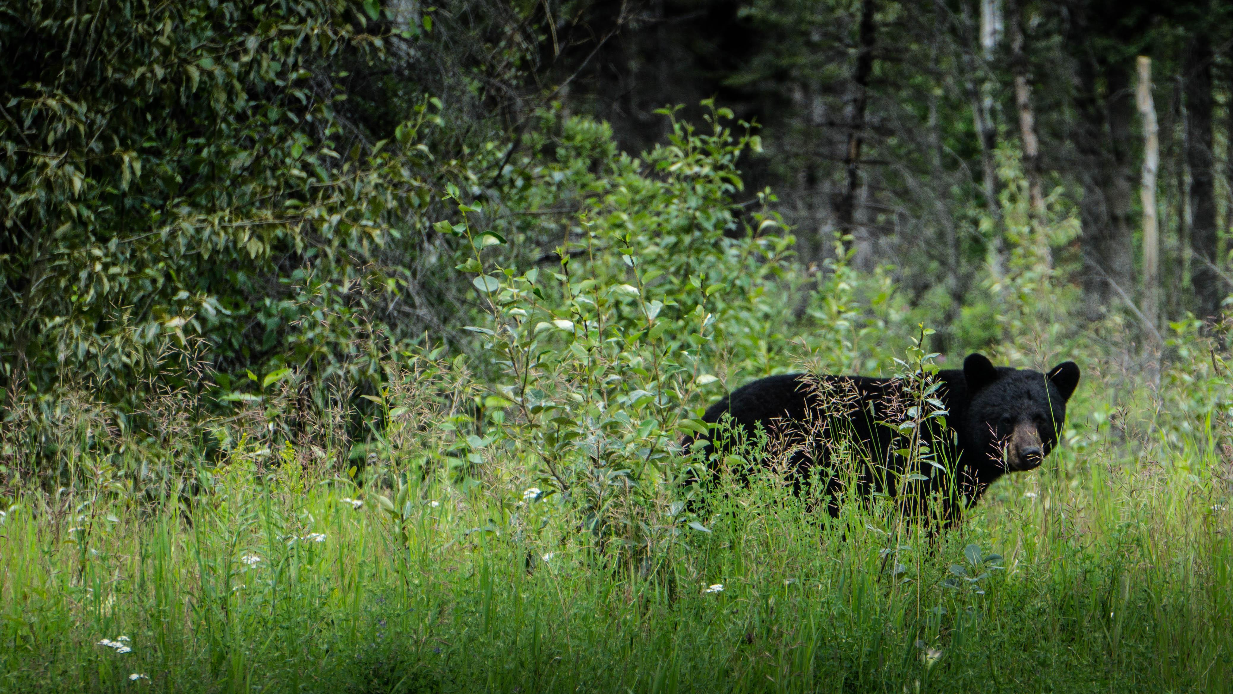 découvrir le Yukon en van