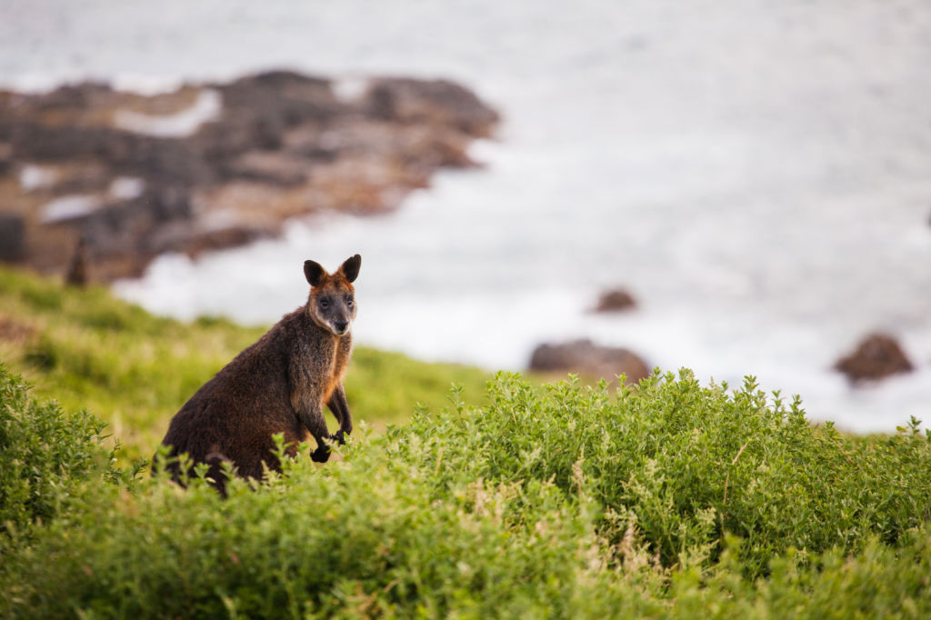 kangaroo island près d'adelaide