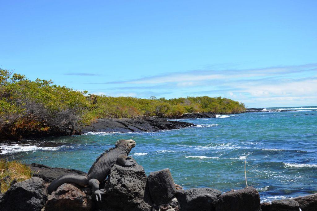 que faire aux Galapagos ?