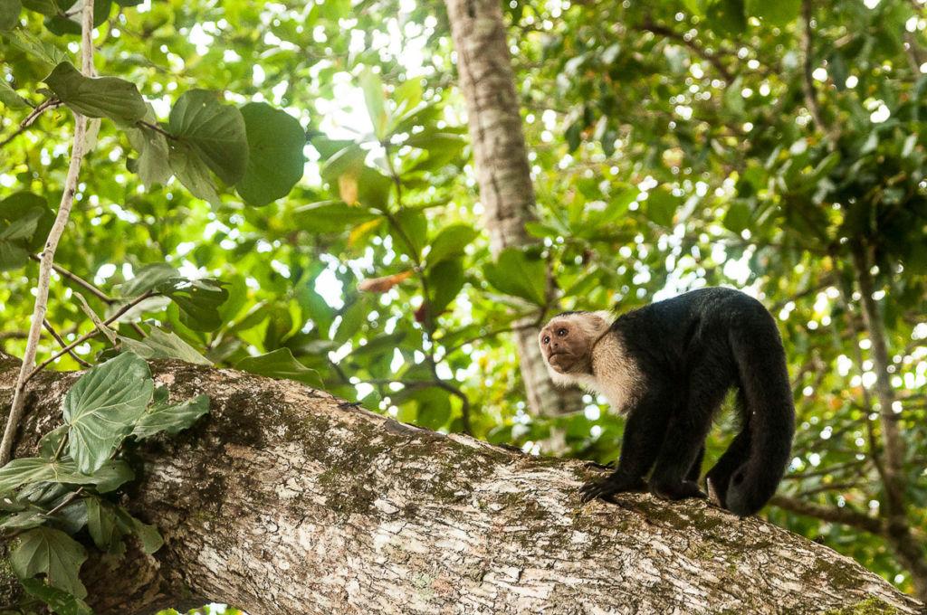 que faire au Costa Rica pour les vacances ? Les activités nature incontournable