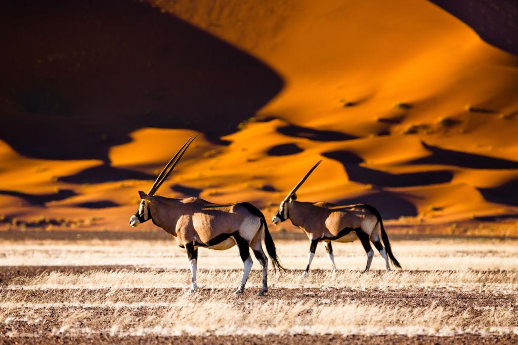 Visa et assurance voyage en Namibie, mode d'emploi